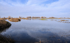 The Colusa Wildlife Refuge
