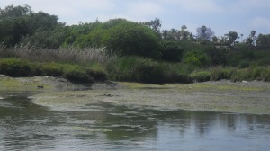 The delta of the 23rd Street stream as it enters the Upper Newport Bay